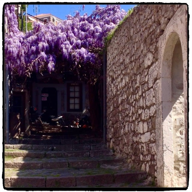 Wisteria in Molyvos