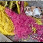 Cat with fishing net