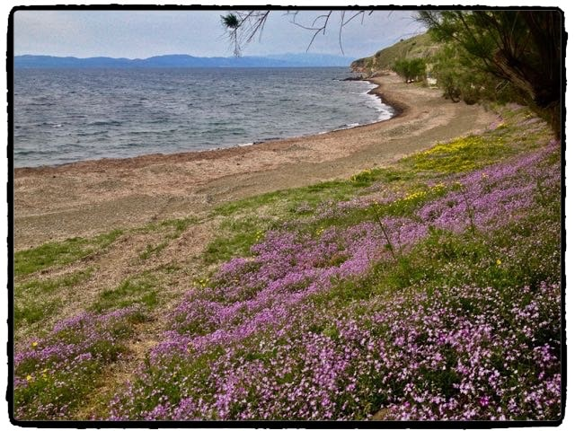 Wildflowers on the beach in Eftalou.