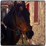 Stellios' horse