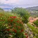 Photo of the Week: Red Poppies Above Molyvos, Greece