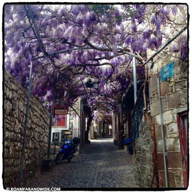 The Wisteria in Molyvos